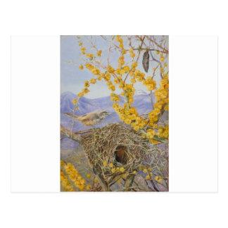 Das Nest des bewaffneten Vogels in der Akazie Postkarte