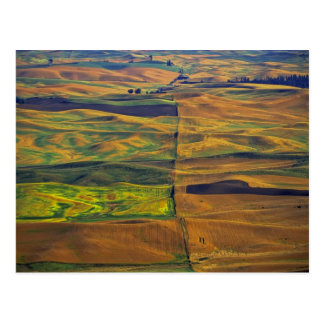 Das Palouse von Steptoe Butte, Colfax, Postkarte
