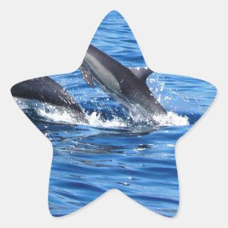 Dauphins espiègles sticker étoile