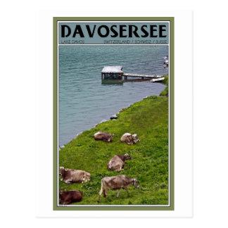 Davos - Kühe entlang der Seeseite Postkarte