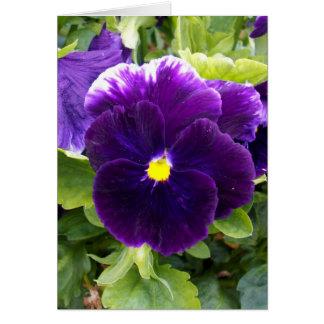 Deep_Purple_Pansy, _Small_Greeting_Card Karte