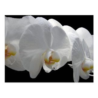 Del-Strahl weiße Orchideen-Postkarte Postkarte