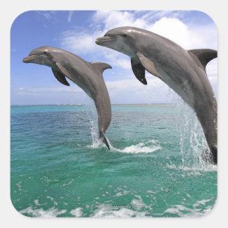 Delfin Sticker Carré