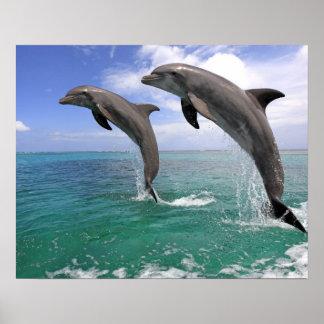Delfin, Delphin, Tuemmler plus brut, Tursiops 4 Poster