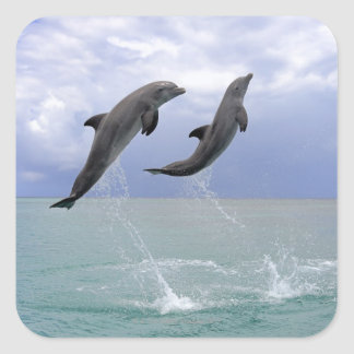Delfin (Tuemmler plus brut) Sticker Carré