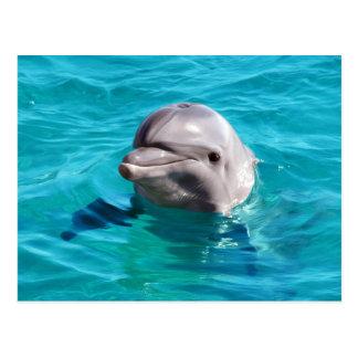 Delphin im blaues Wasser-Foto Postkarte