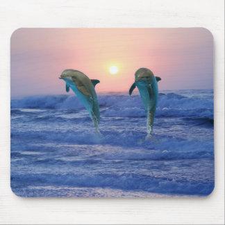 Delphine am Sonnenaufgang