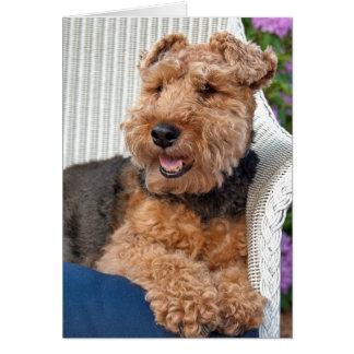 Denken an SieWaliser Terrier auf geflochtenem Karte