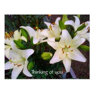 """""""Denkend an Sie"""" schöne weiße Lilien-Postkarte Postkarten"""