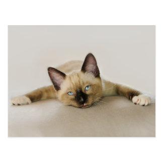 Der coole Aufenthalt und kühlen heraus Kätzchen Postkarte
