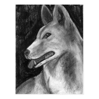 Der Dingo Postkarte