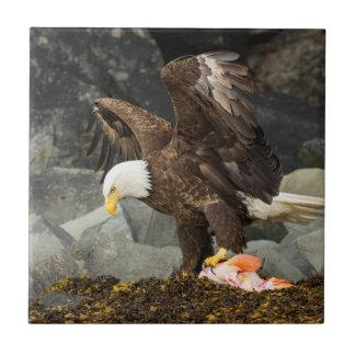 Der entscheidende Weißkopfseeadler Keramikfliese