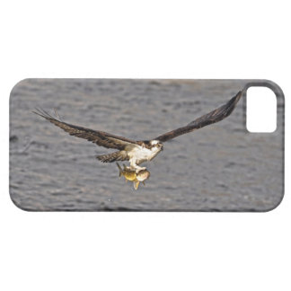 Der Fliegen-Osprey-u. Fisch-4 Tier-Fotografie iPhone 5 Case