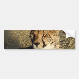 Der Gepard Autoaufkleber
