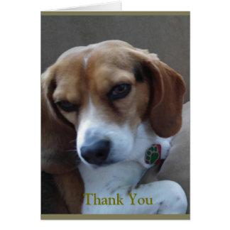 """Der gerettete """"sonnige"""" Beagle danken Ihnen zu Karte"""