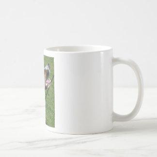 Der Hund Kaffeehaferl