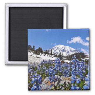 Der Mount Rainier am Paradies-Punkt Quadratischer Magnet