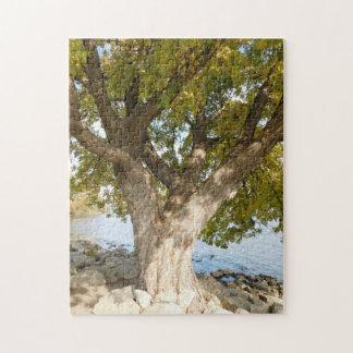 Der perfekte kletternde Baum