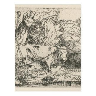 Der Stier durch Rembrandt Postkarte