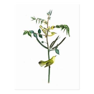 Der Trällerer-Johns Audubon der Kinder Vögel von Postkarten