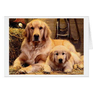 Der Vatertags-Karte golden retriever-