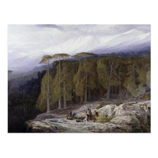 Der Wald von Valdoniello, Korsika, 1869 (Öl auf c Postkarte