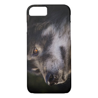Der Wolf iPhone 8/7 Hülle