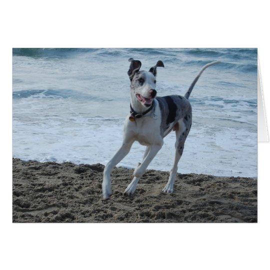 Deutsche Dogge am Strand Grußkarte