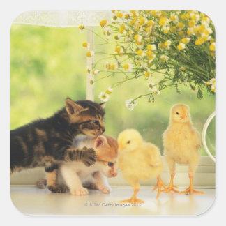 Deux chatons et deux poussins jouant, vue de face, autocollants carrés
