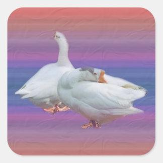 deux oies blanches espiègles sticker carré