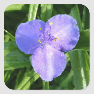 Dewy Trillium-blaue lila Frühlings-Wildblume Quadratischer Aufkleber