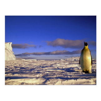 Die Antarktis, Kap Darnley. Kaiser-Pinguin Postkarte