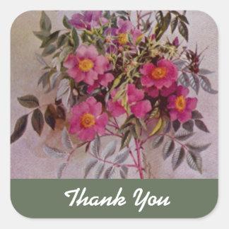 Die botanische Wildblume danken Ihnen Rosa des Quadratischer Aufkleber