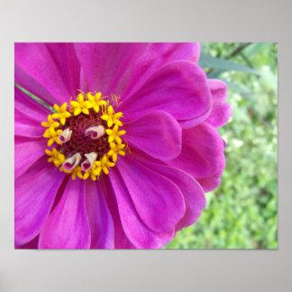 Die Erinnerungen einer Blume Poster