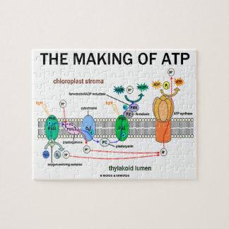 Die Herstellung von Atp (fotosynthetische Haltung)
