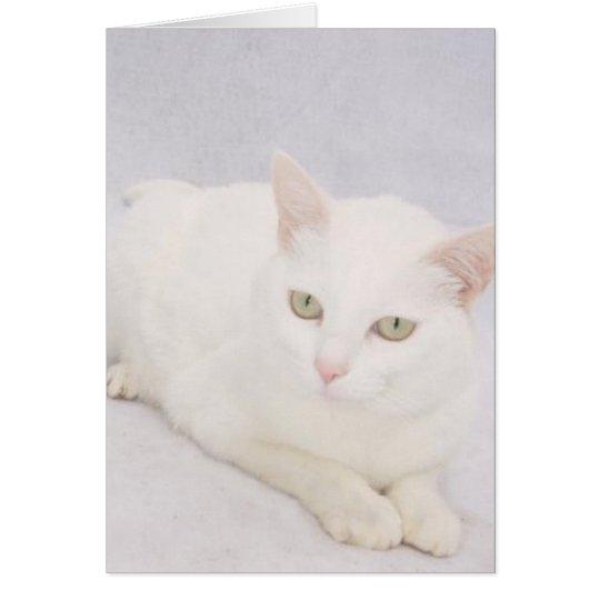 Die kleine weiße Katze Grußkarte