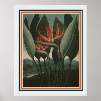 """""""Die Königin-"""" Tempel von Flora 16 x 20 Poster"""