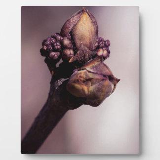 Die lila Knospe Fotoplatte