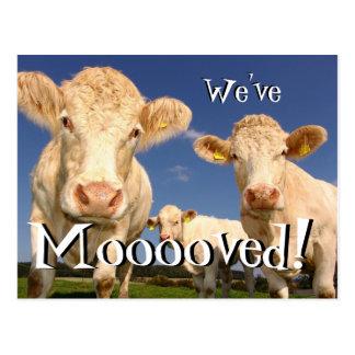 Die lustigen Kühe haben wir neue Postkarte