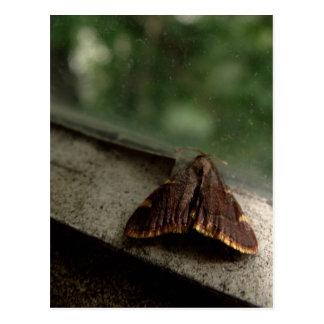 Die Motte Postkarte