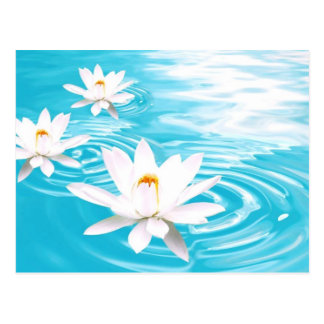 Die Pflanzen des weißen Lotos, die auf Türkis Postkarte