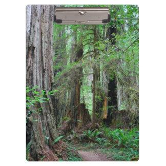 Die Rothölzer - Mammutbaum Klemmbrett