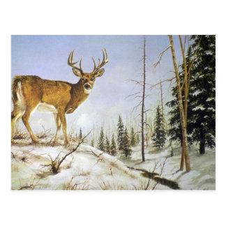 Die Spitze des Jay, weißes Schwanz-Rotwild Postkarte