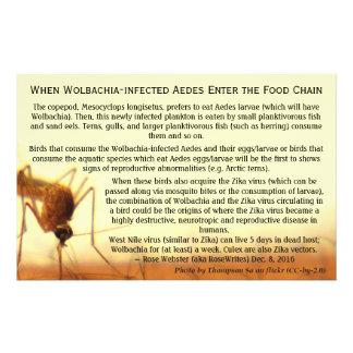 Die Tatsachen: Wolbachia-Angestecktes Aedes durch Flyer