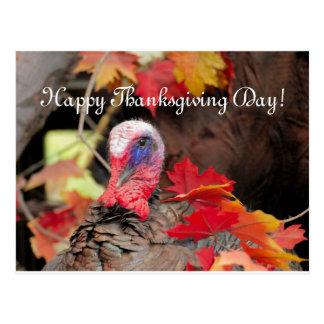 Die Türkei am Blätter-Erntedank-Tag Postkarte