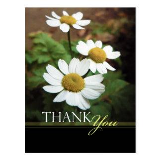 Die weißen Blumen Ochsenauge-Gänseblümchen danken Postkarte