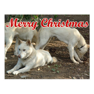 Dingo Postkarte