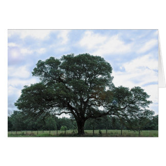 """Diricias Baum"" Fotografie durch Krill Sean Allan Karte"