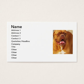 Dogue de Bordeaux French Mastiff Visitenkarte