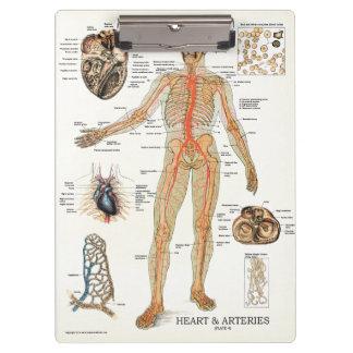 Doktoren Office Heart Anatomy Clipboard